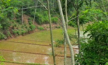 donasi sawah produktif lumbung desa, pertanian, sinergi foundation