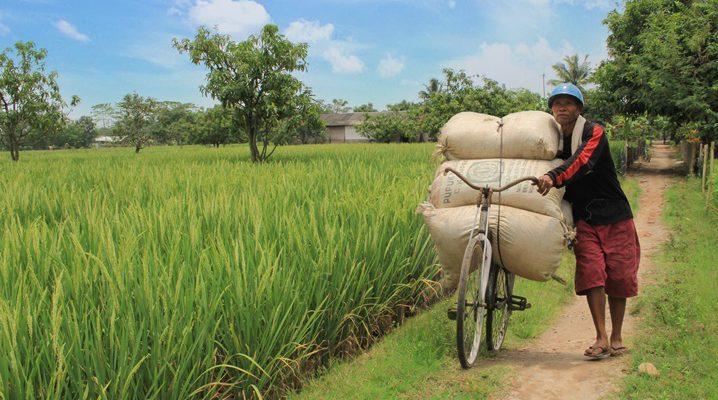 wakaf pertanian, lumbung desa, sawah produktif, sinergi foundation