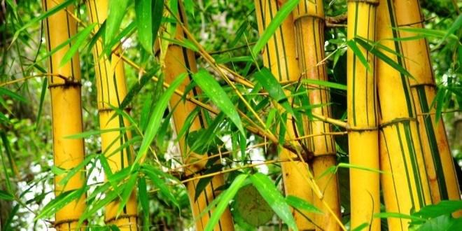 bambu, kurban, green kurban, lumbung bambu, penghijauan
