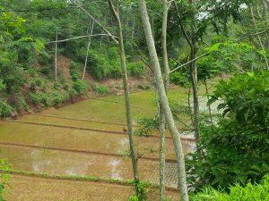 Donasi Sawah Produktif – Lumbung Desa