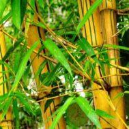 bambu, green kurban, bambu, kurban, green kurban, lumbung bambu, penghijauan