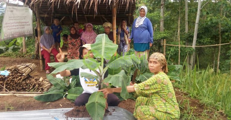 program lumbung desa, lumbung desa, pertanian organik, pemberdayaan, petani wanita, sinergi foundation, KWT