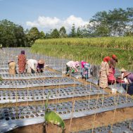 petani wanita, petani, pertanian, lumbung desa, sinergi zakat, sinergi foundation