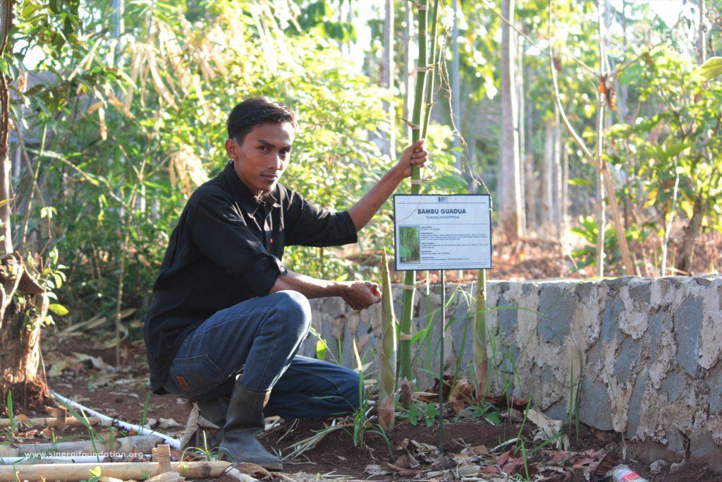 bambu, guadua, pemberdayaan