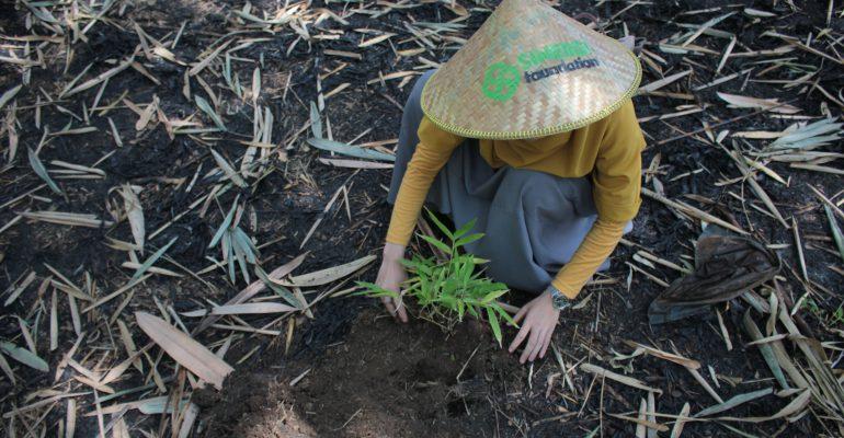 bambu, lumbung desa, bumi