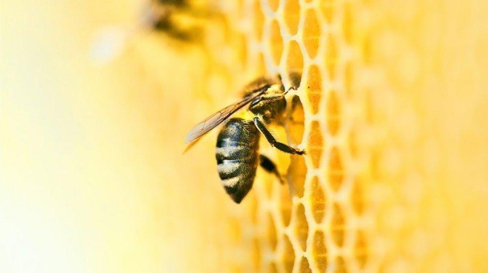lebah, al quran