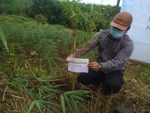 bambu, penanaman bambu, green kurban