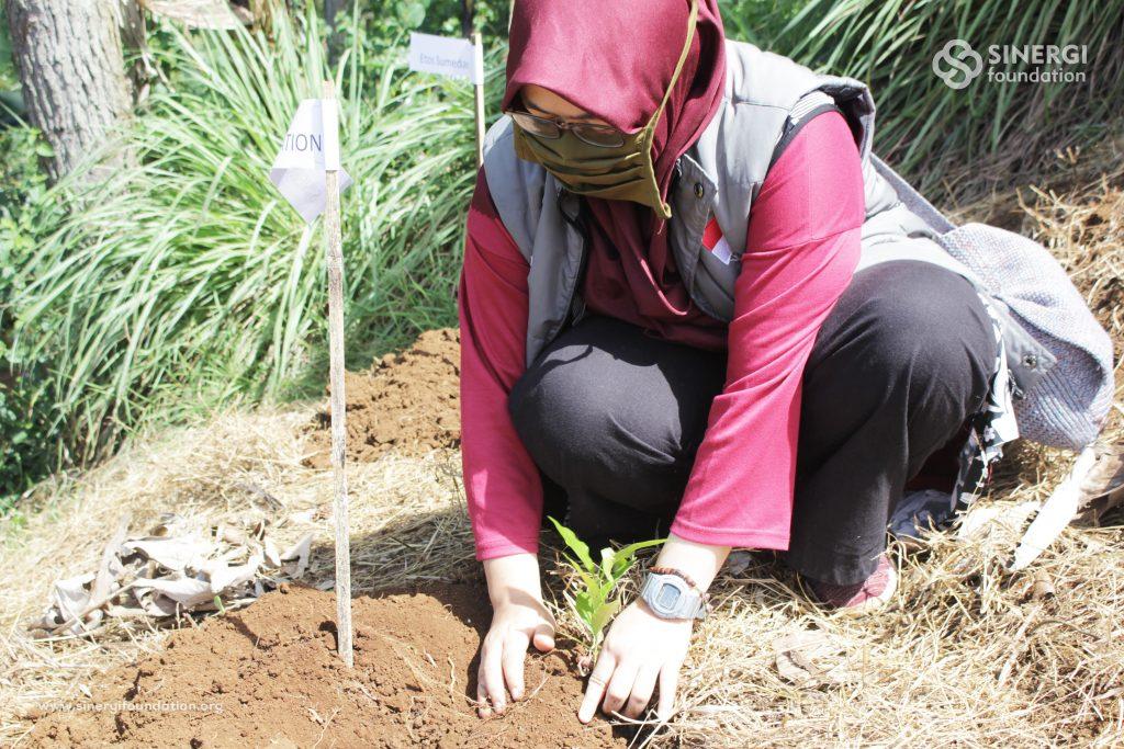 bambu, penanaman bumi