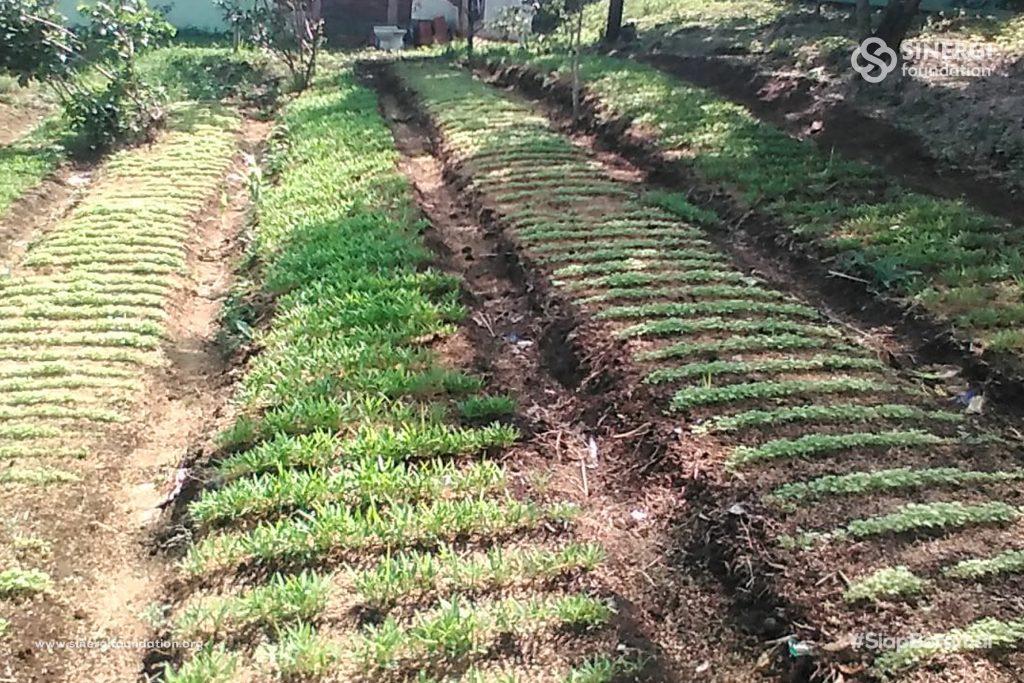 lumbung desa, pertanian, tani