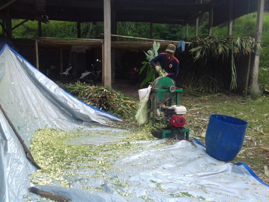 Waqf Integrated Farm, kurban, kambing, peternakan