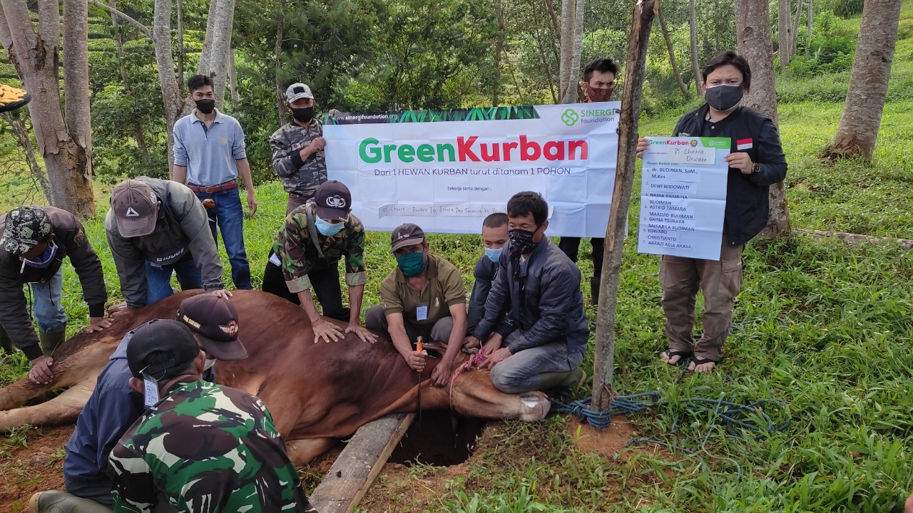 green kurban, kurban, qurban, pelosok
