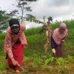 Partisipasi Aktif Petani Binaan dalam Program Lumbung Desa